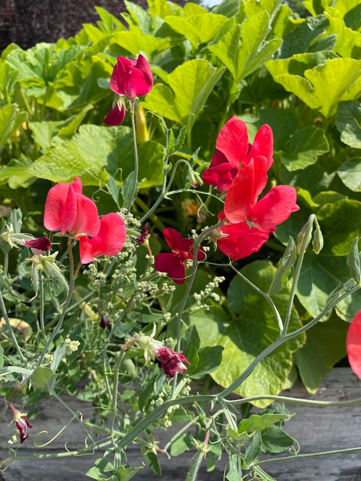 How Does Your Garden Grow? (Part 2)